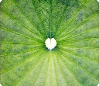 leaf-surrounded-by-open-space-heart-shape